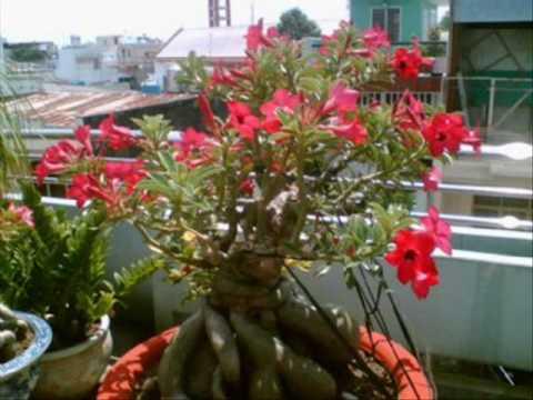 hoa sứ nhà nàng_0001.wmv