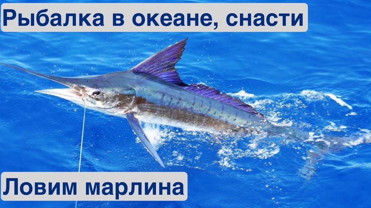 Зимняя рыбалка в океане. Рыболовные снасти | Жизнь на яхте Cupiditas