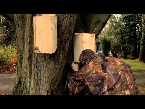 First Cut - Squirrel Wars, Red vs Grey