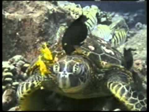 Les merveilles de la vie sous-marine (HARUNYAHYA)