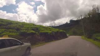 Cameron Highland :: Road To Sg Palas Tea Plantation