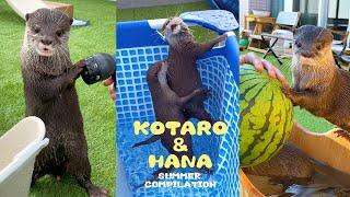 夏まるごと総集編!カワウソコタローとハナのアツすぎた夏 Otters Summer Fun Compilation