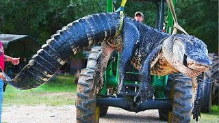 10 Scary Reptiles Caught