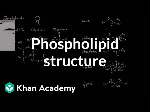 Phospholipid structure | Cells | MCAT | Khan Academy