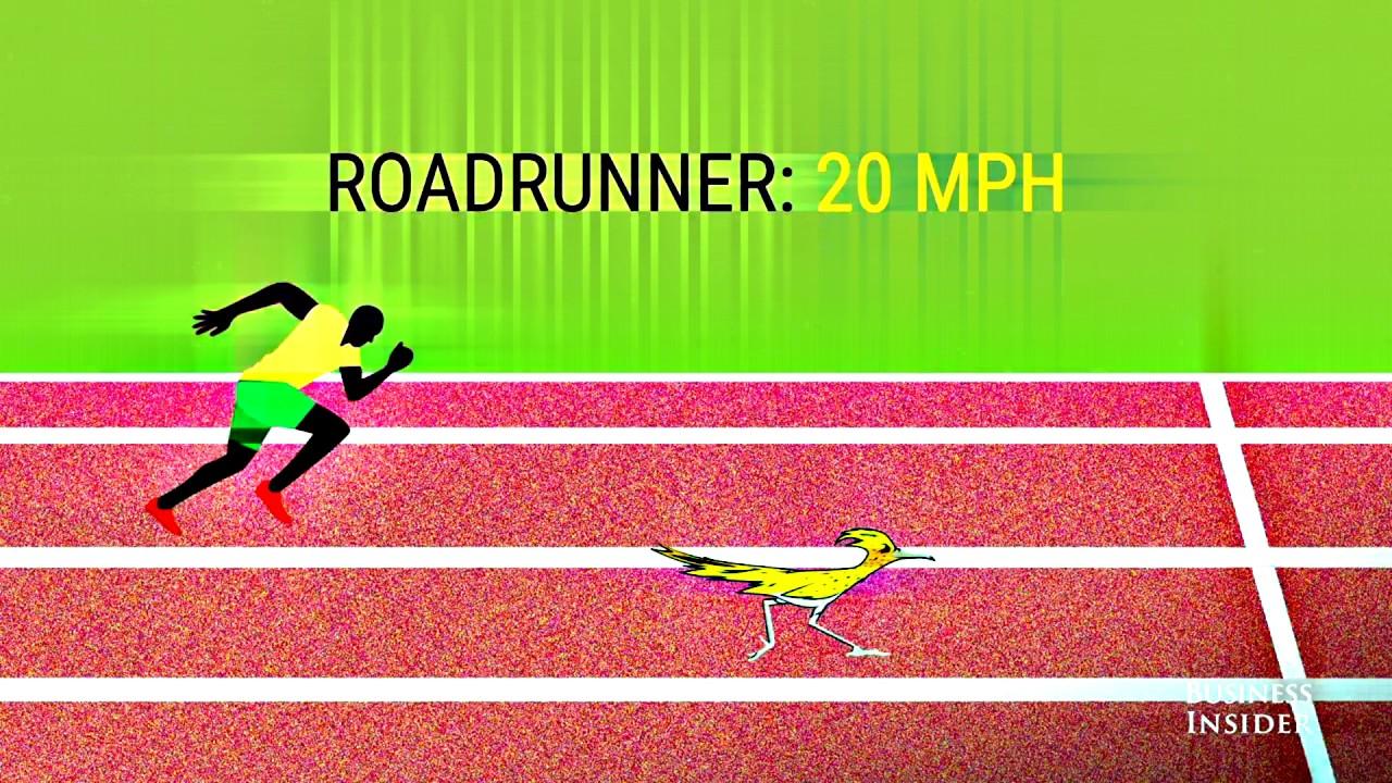 How fast can Usain Bolt really run? - YouTube