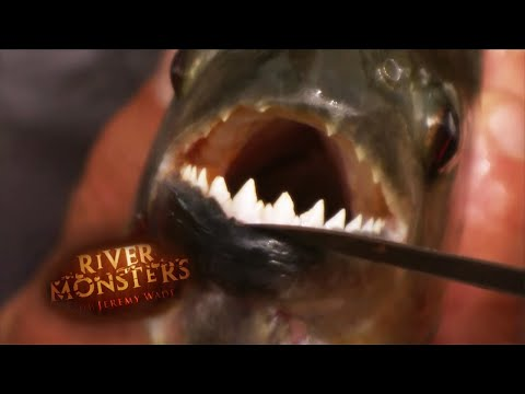 Eaten ALIVE By Catfish | HORROR STORY | River Monsters