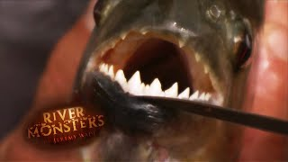 Half-Swallowed By A Catfish - River Monsters