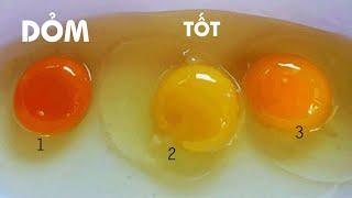 Vì sao lòng đỏ mỗi quả trứng là có màu khác nhau, đâu mới là trứng tốt ?