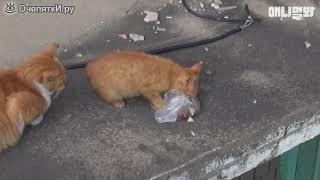 Кошка, которая берёт еду только в пакете)