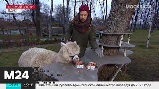 Утро теплая погода ожидается в Москве 13 декабря - Москва 24