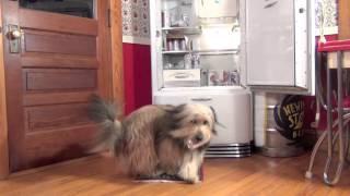 Benny Sizzler - Rhode Island Dead (video)