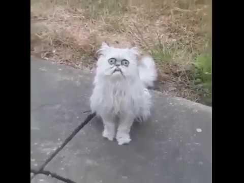 weird fuckin cat