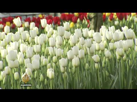 Tulip festival creates jobs in Turkey