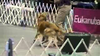 Utility B - Orlando Dog Training Club - 12/13/12