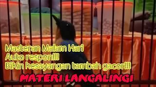 Gambar cover Bikin Kesayangan Makin Gacor!!! Masteran Langalingi Malam hari