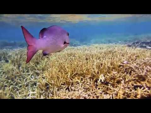 The Pacific Remote Islands Marine National Monument