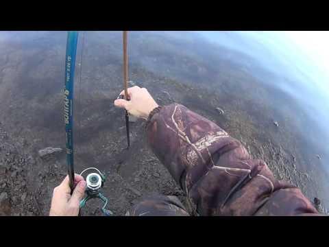 рыбалка на сазана на реке обь