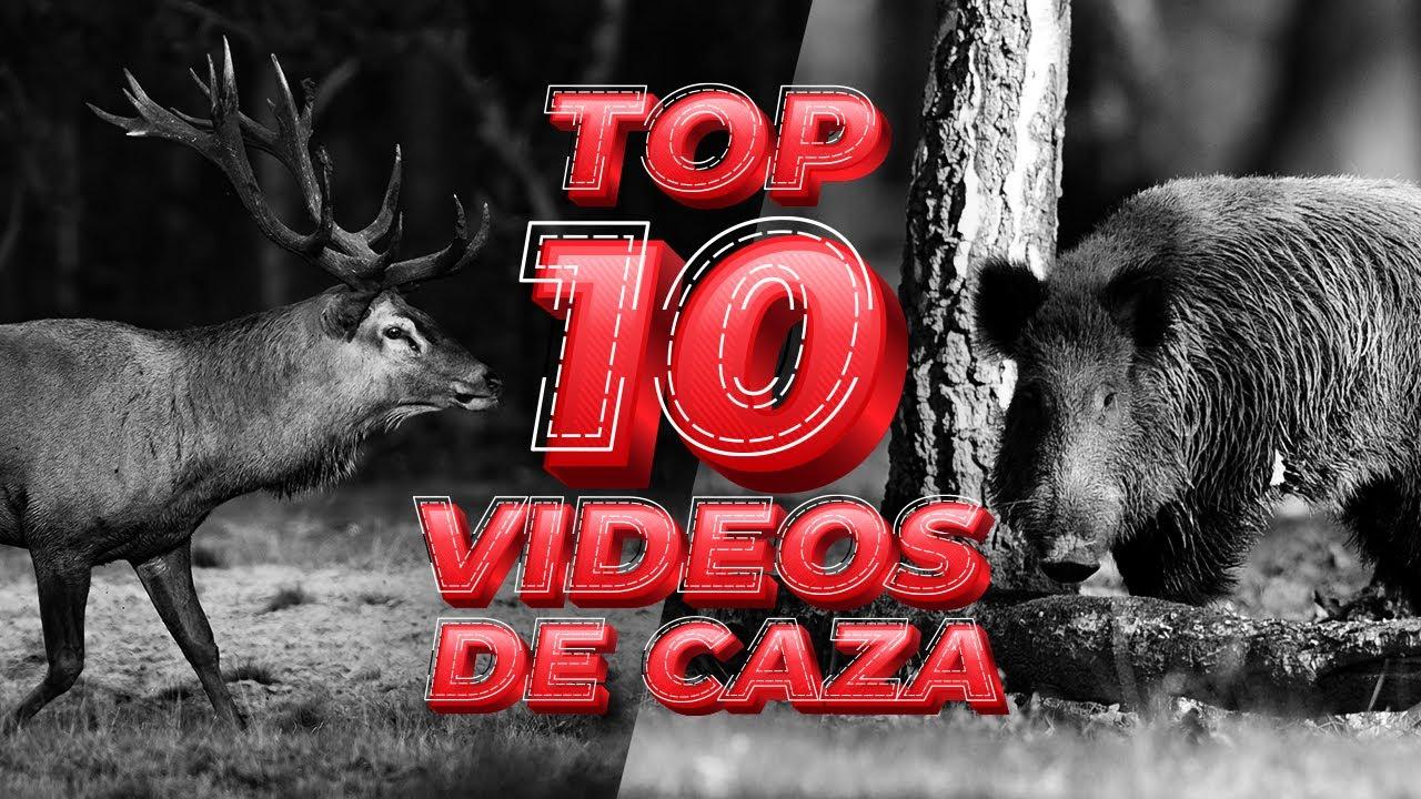 TOP 10 VIDEOS DE CAZA - Caza de jabalí 🐗 y venado 🦌 [ ESPECIAL 1️⃣0️⃣0️⃣ VIDEOS ]