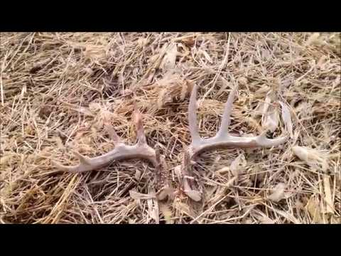 Iowa shed hunting 2017 15 and 16 match set youtube for Iowa fishing license 2017