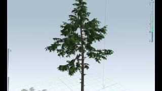 Western Hemlock - Speedtree