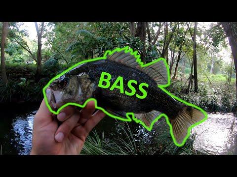 Gold Coast Bass Fishing In A Suburban Creek