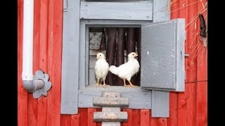 Самая простая выпойка для цыплят.