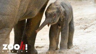 Geburt im Kaeng Krachan Elefantenpark