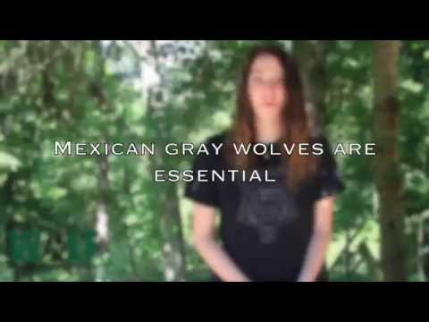 Mexican Gray Wolves are Essential