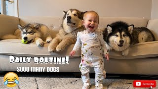 This Is Our Daily Routine. You Won't Believe The Things We Get Up To!! (So Cute!)