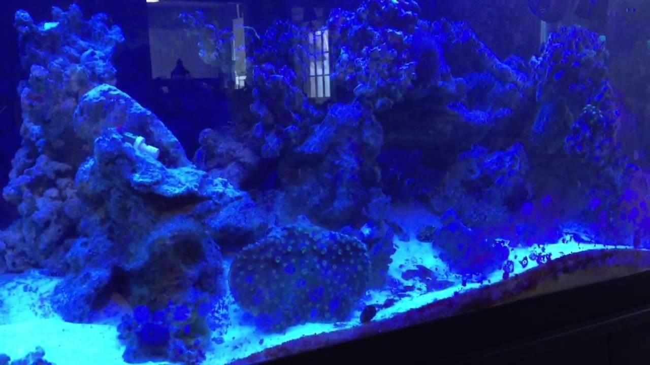 marine velvet outbreak youtube