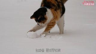 찜통 더위 기념 삼색이 눈밭영상