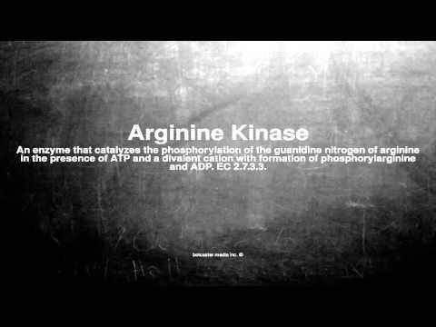 Medical vocabulary: What does Arginine Kinase mean