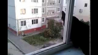 Прогулка городской кошки