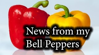Bell Peppers. Update Episode #5