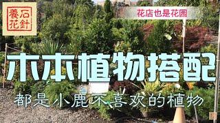 庭院木本植物搭配,都是小鹿不喜欢的品种