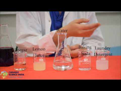 Measuring pH in Foods Experiment