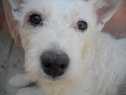 мастит у собаки лечение в домашних условиях фото