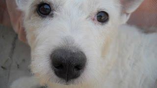 Как Собаку Лечат От Мастита