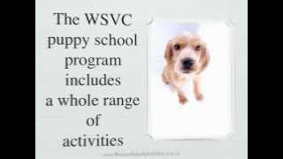 Dog Training Townsville | Puppy Training School Of Excellence At Wsvc Townsville