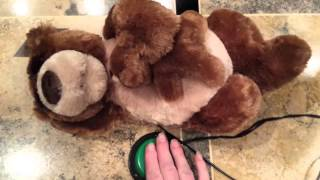 Repeat youtube video Switch Adapted Snoring Bear Baby Bear