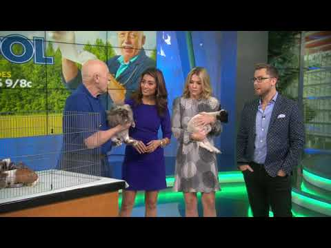 "Nat Geo WILD's ""The Incredible Dr. Pol"" brings baby lamb, rabbit and more to Good Day LA"