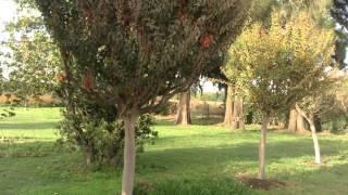 Monasterio Santa María Los Toldos -Breve recorrido- 1ra. Parte.-