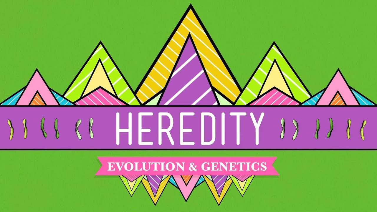 Heredity Crash Course Biology 9 Youtube