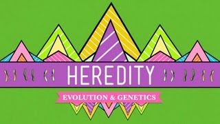 Crash Course: Biology: Heredity thumbnail