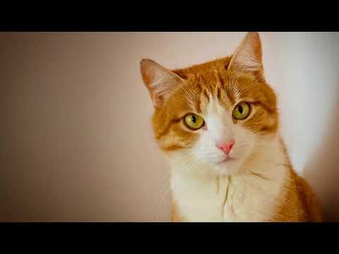 Вопрос: С какого возраста стерализуют кошку?