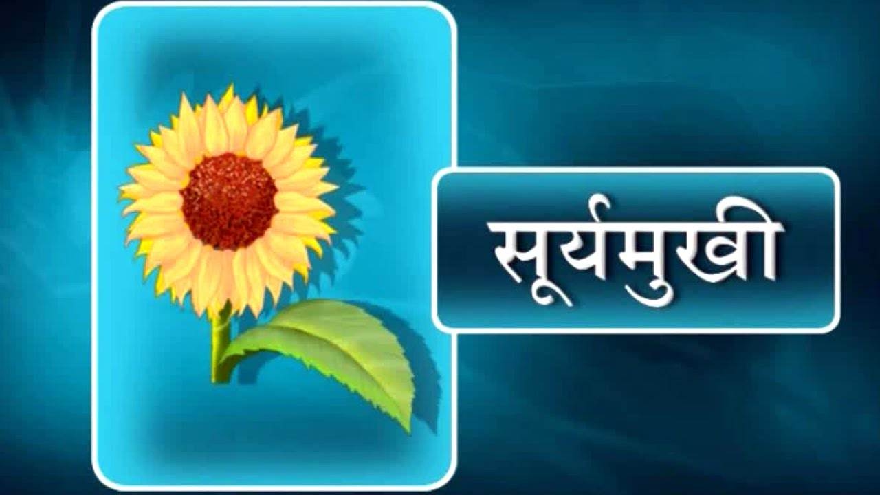 Flower images with names in hindi my web value flowers name in hindi for class 3 kids youtube izmirmasajfo Images