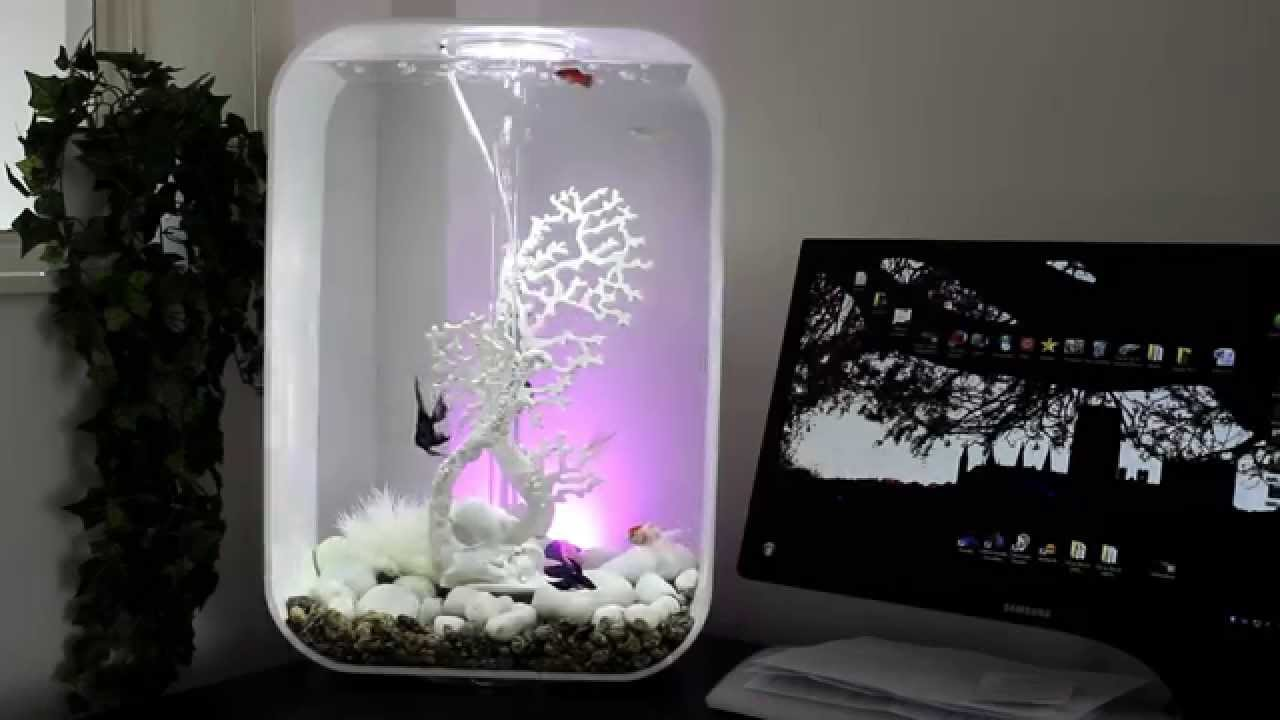 Biorb Life 60 Fish Tank With Tropical Coldwater Fish Youtube