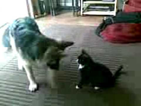 Stupid Dog Versus Evil Cat
