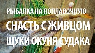 Ловля на живца щуки, судака, окуня на поплавок с Нормундом Грабовскисом.