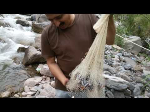 Trout fishing with net in Pakistan